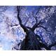 霧氷の大木