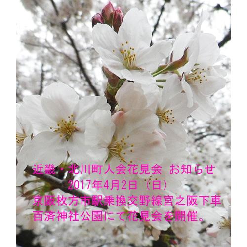 近畿・北川町人会 花見会