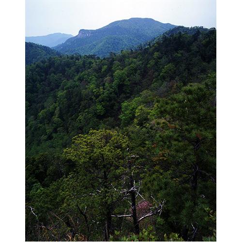 新緑の大崩山