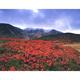 紅葉と立山
