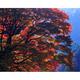 紅葉の大樹
