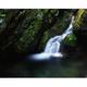 無名の小滝