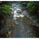 新緑の溪流