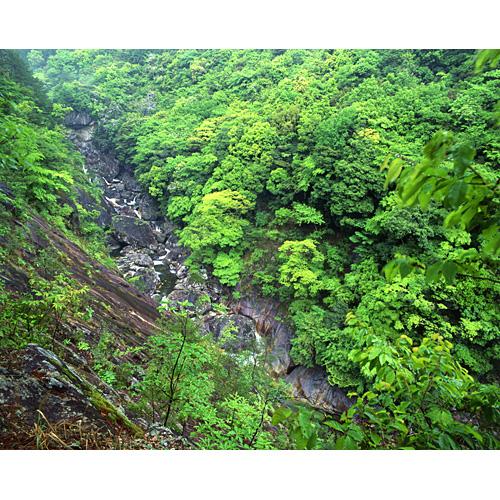 新緑の溪谷