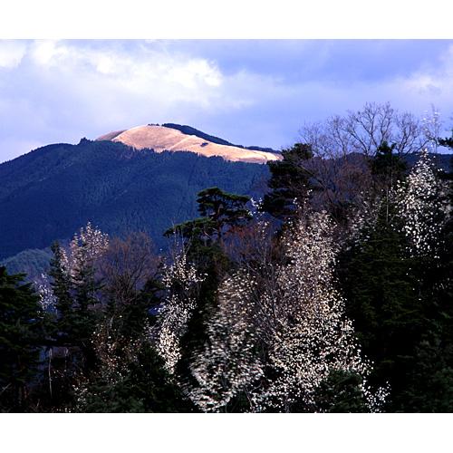 早春の岩湧山