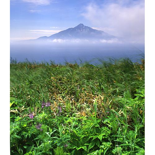 花の浮き島と利尻富士