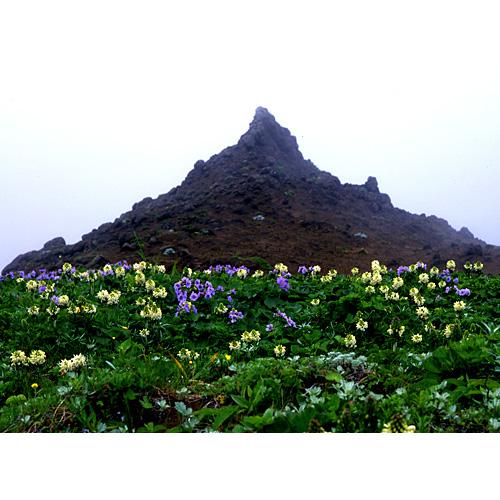 お花畑と岬