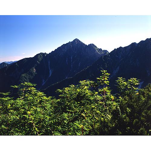 ナナカマドと剱岳