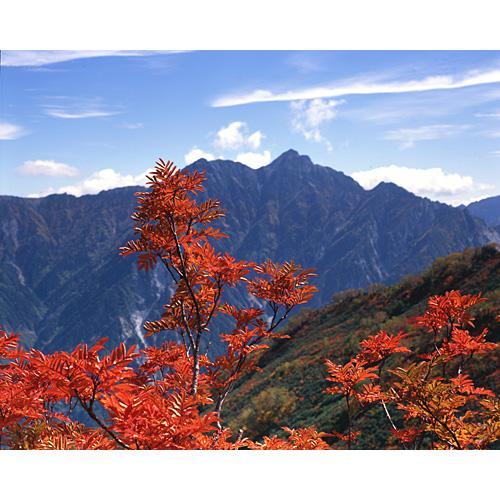紅葉と針ノ木岳