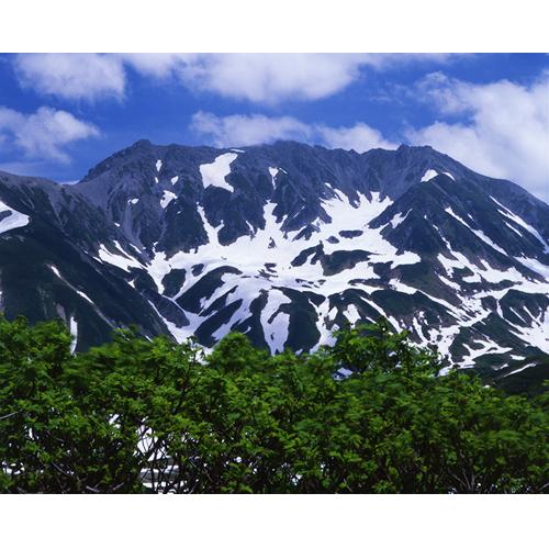 新緑と立山
